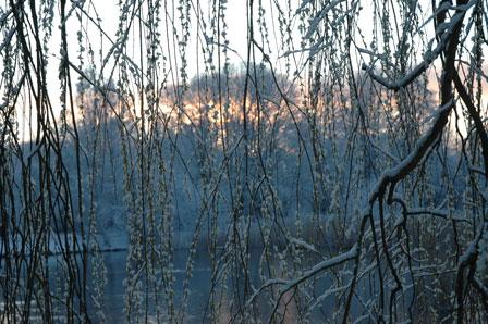 Stadion søen gennem et piletræ…