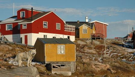 Der er flere slædehunde end mennesker i Ilulissat