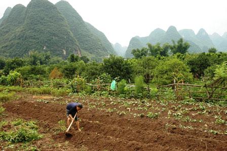 Der dyrkes også grøntsager i området