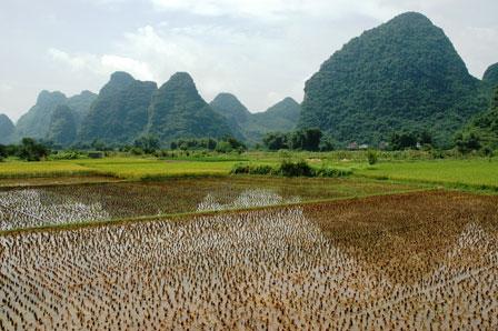 Masser af nye risplanter